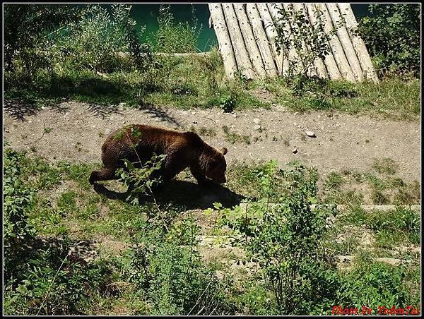 德瑞day4-5熊公園0026.jpg