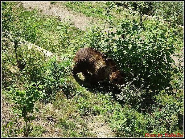 德瑞day4-5熊公園0028.jpg
