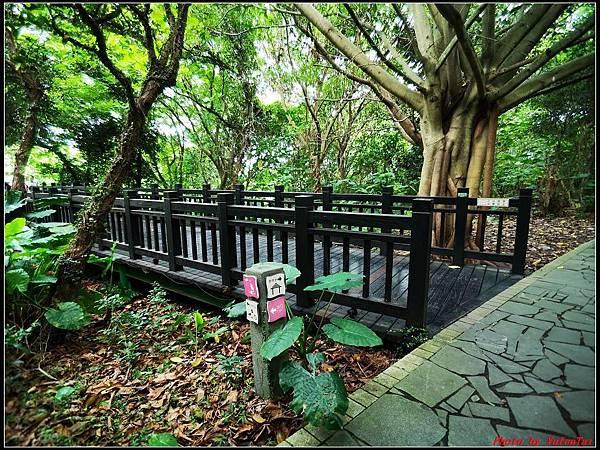 關渡自然公園0008.jpg