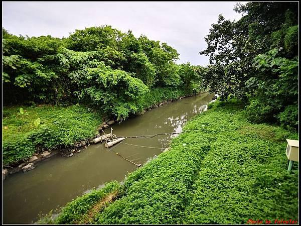 關渡自然公園0011.jpg