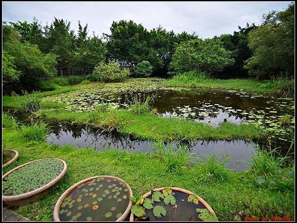 關渡自然公園0014.jpg