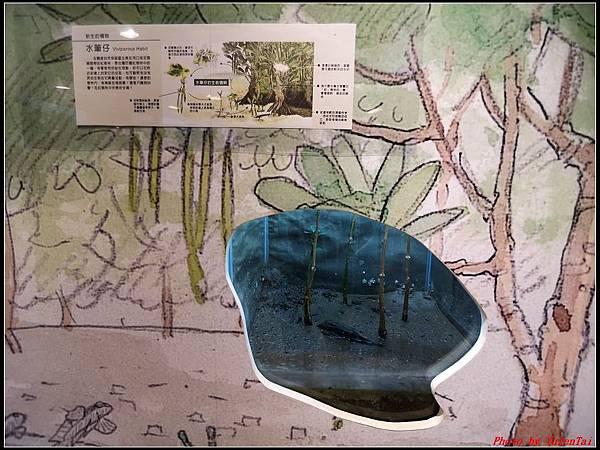 關渡自然公園0041.jpg
