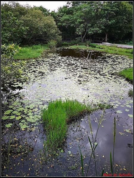 關渡自然公園0053.jpg