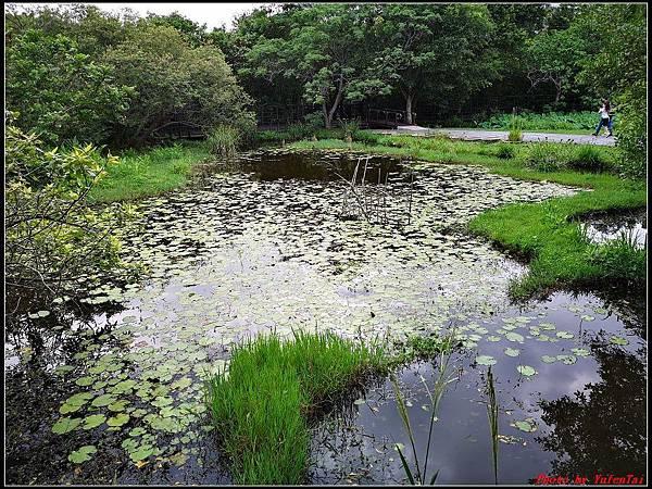 關渡自然公園0054.jpg