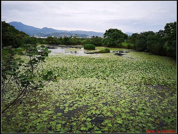 關渡自然公園0060.jpg