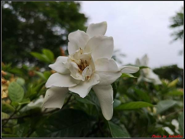 關渡自然公園0065.jpg