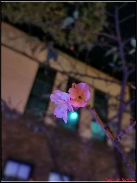 新竹麗池公園077.jpg
