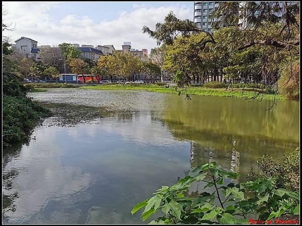 麗池公園櫻花汀甫圳賞櫻步道012.jpg