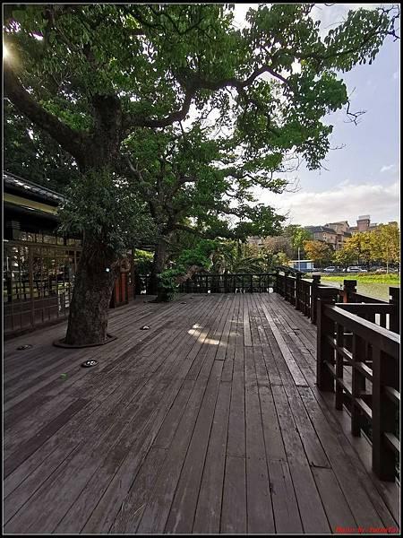 麗池公園櫻花汀甫圳賞櫻步道016.jpg