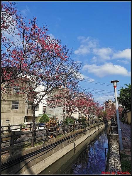 麗池公園櫻花汀甫圳賞櫻步道087.jpg