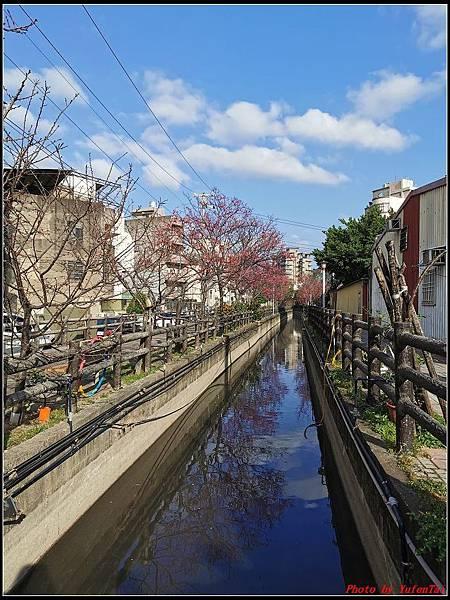 麗池公園櫻花汀甫圳賞櫻步道084.jpg