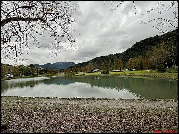 蜊埤湖畔落羽松020.jpg