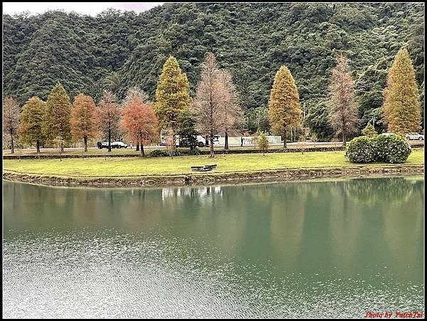 蜊埤湖畔落羽松038.jpg