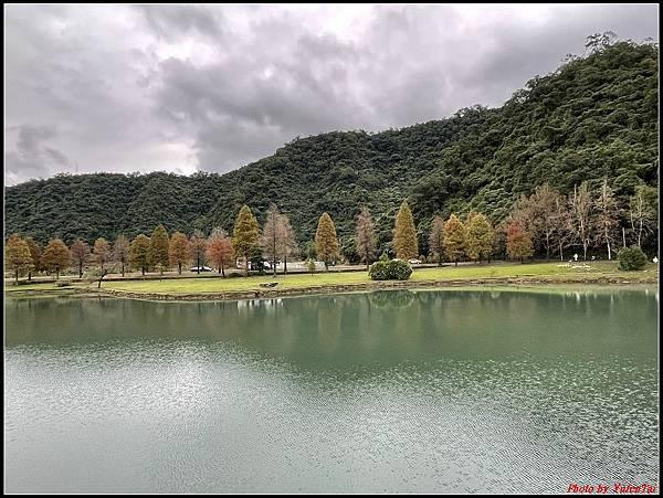 蜊埤湖畔落羽松040.jpg