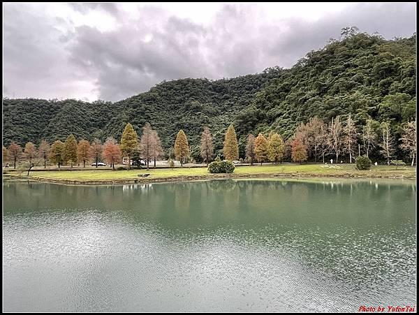蜊埤湖畔落羽松039.jpg