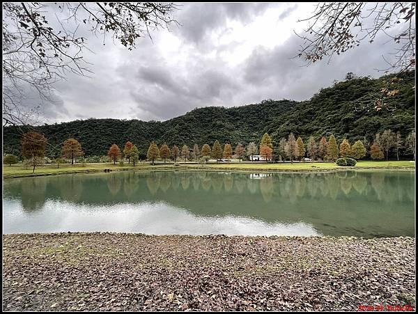 蜊埤湖畔落羽松046.jpg