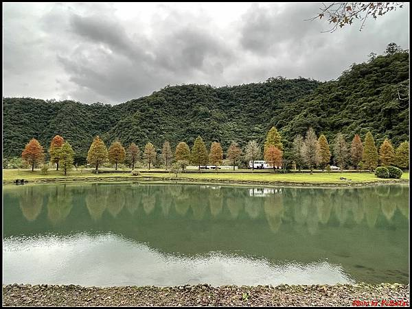 蜊埤湖畔落羽松047.jpg