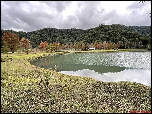 蜊埤湖畔落羽松052.jpg