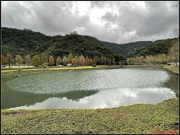 蜊埤湖畔落羽松054.jpg