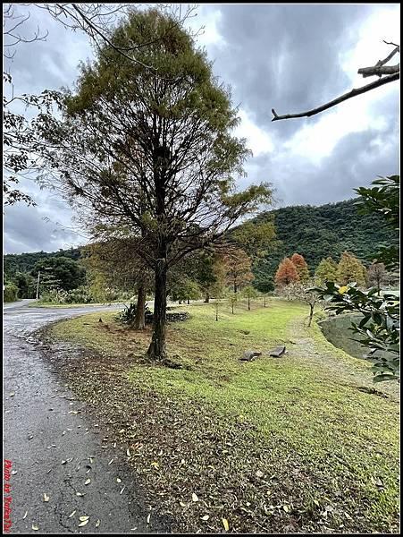 蜊埤湖畔落羽松057.jpg
