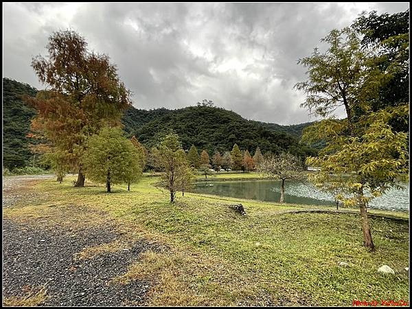 蜊埤湖畔落羽松060.jpg