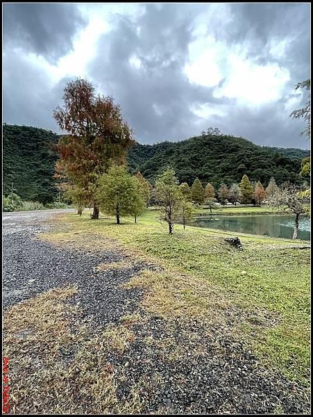 蜊埤湖畔落羽松059.jpg