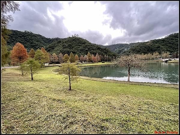 蜊埤湖畔落羽松065.jpg