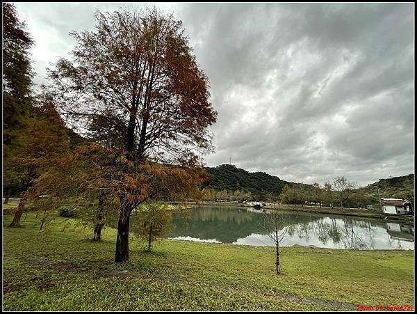 蜊埤湖畔落羽松076.jpg