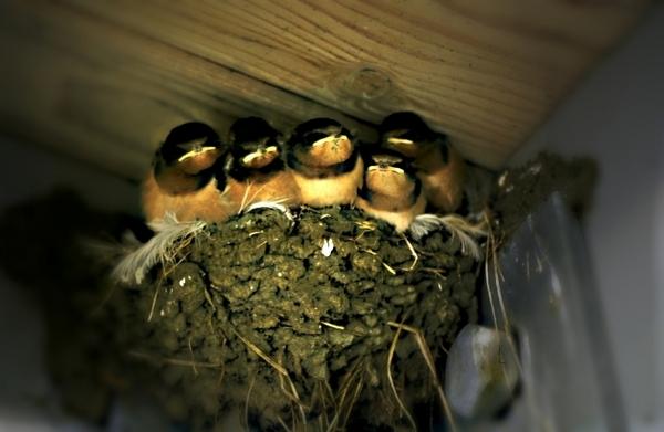 鳥與人同居