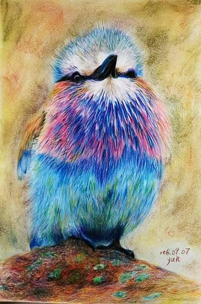 鳥類_170907_0007.jpg