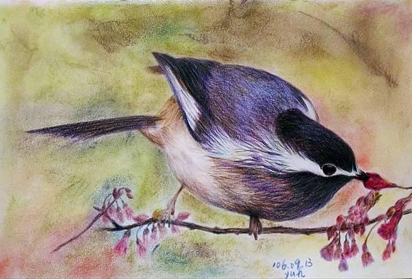 鳥類_170913_0008.jpg