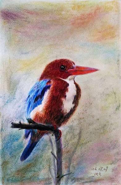 鳥類_170929_0009.jpg