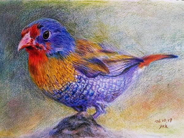 鳥類_171019_0010.jpg