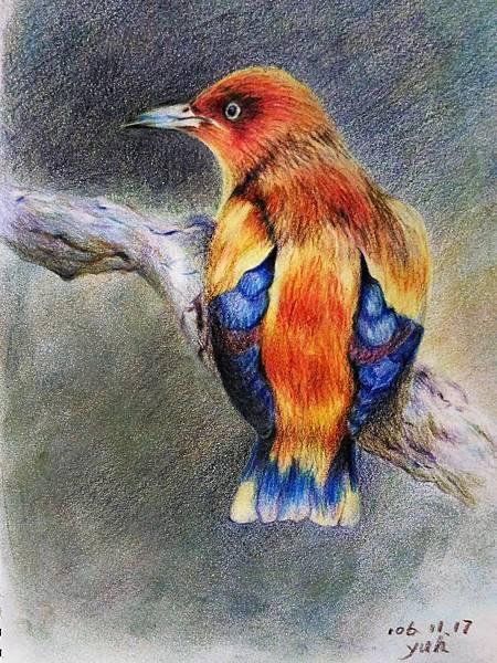 鳥類_171117_0011.jpg