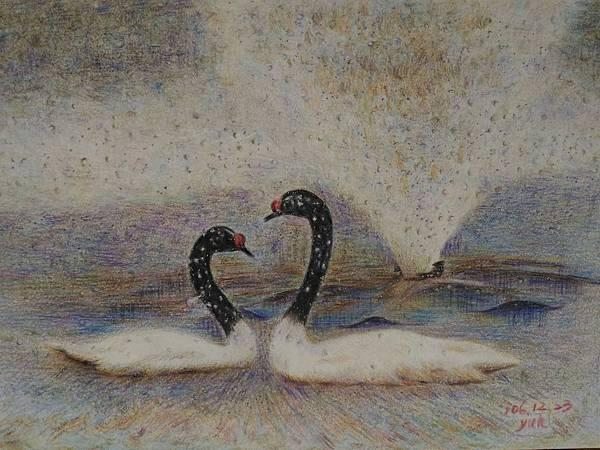 鳥類_171224_0012.jpg