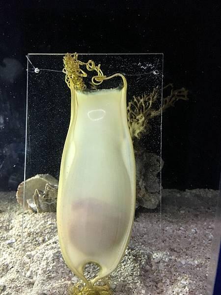 沖繩day2 象鼻石,古宇利島,水族館_180601_0216.jpg