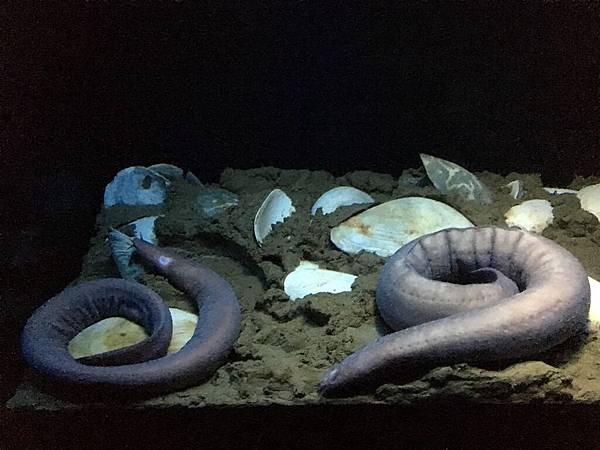 沖繩day2 象鼻石,古宇利島,水族館_180601_0215.jpg