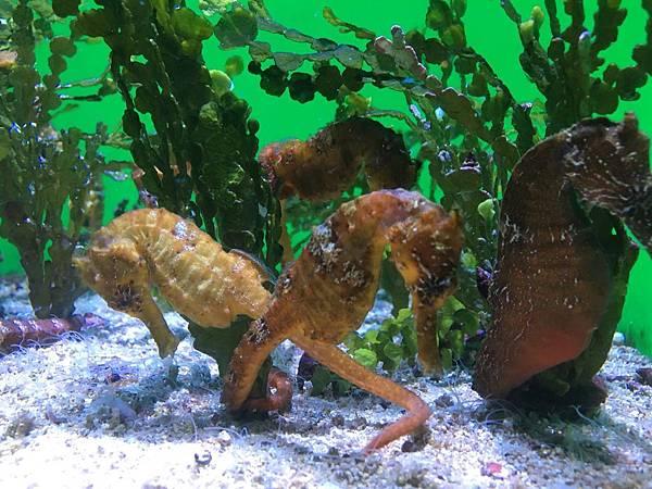 沖繩day2 象鼻石,古宇利島,水族館_180601_0227.jpg