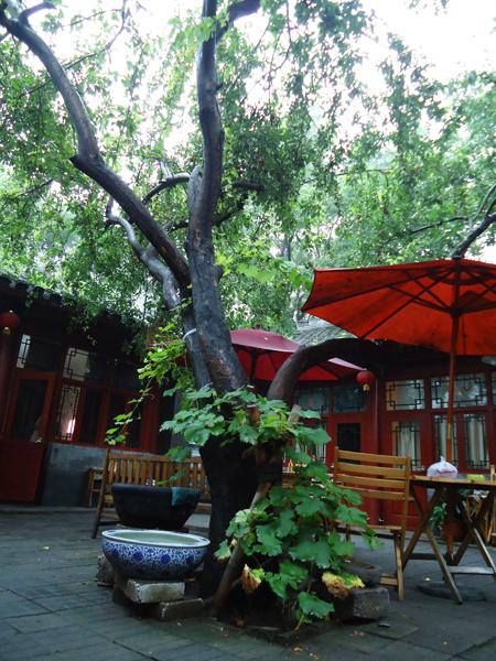 易靜小棧院裡的百年海棠