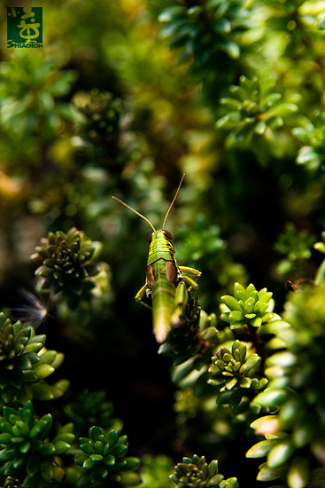 yt-photo-insect134s.jpg