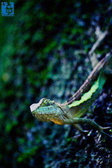 yt-photo-lizard004s.jpg