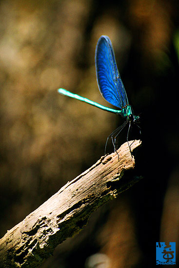yt-photo-insect120s.jpg