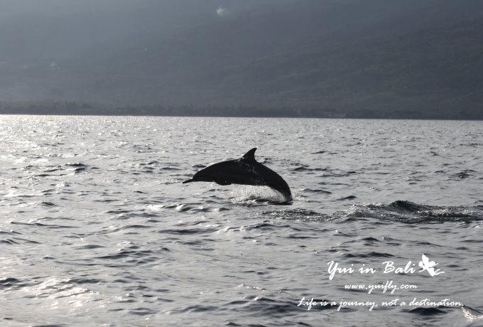 海豚_01.jpg