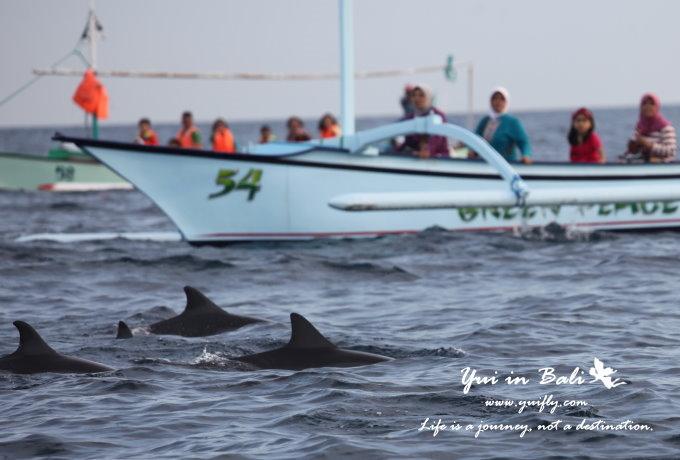 海豚_02.jpg