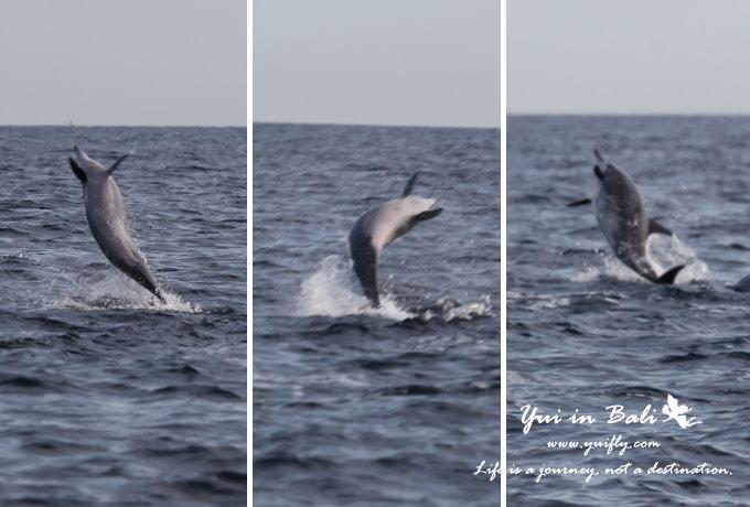 海豚_06.jpg