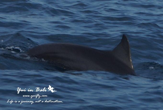 海豚_10.jpg