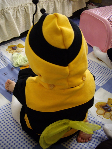 蜜蜂豆子的背影.jpg