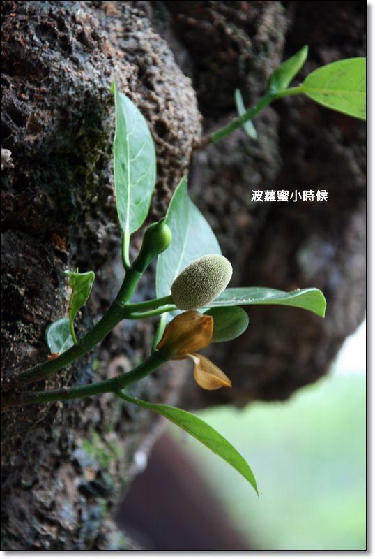 陸龍灣07.JPG