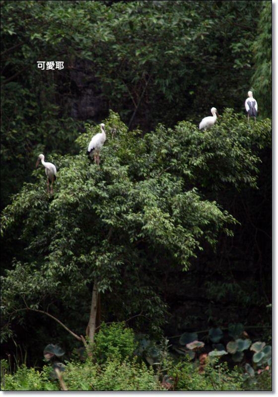 陸龍灣46.JPG