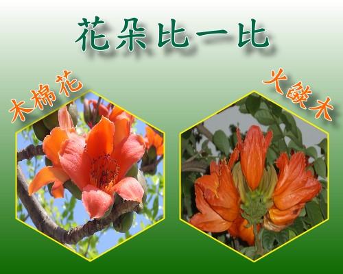 花朵比一比.jpg